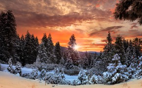 Picture winter, forest, the sky, clouds, snow, trees, mountains, Canada, glow