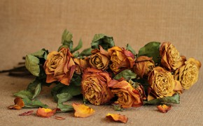 Wallpaper background, roses, buds, flowers