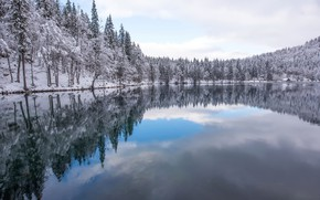 Picture winter, forest, lake