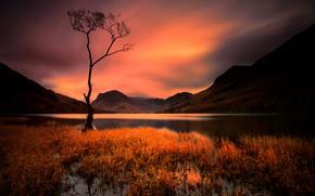 Picture tree, lake, night, mountains