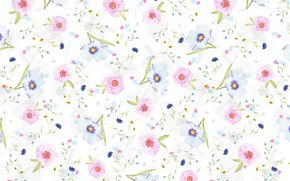 Picture background, petals, flowers, Daisy