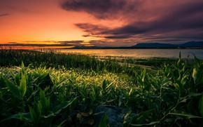 Picture field, grass, sunset