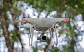 Picture phantom, phantom, drone, quadcopter