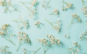 Picture flowers, background, white, white, flowers, spring, floral