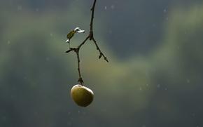Wallpaper nature, branch, Apple