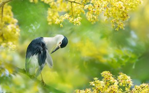 Picture branches, tropics, bird, Taiwan, flowering, FuYi Chen