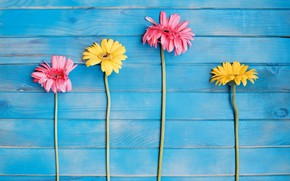 Picture Flowers, Branches, Gerbera, Wooden background