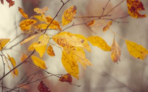 Picture autumn, leaves, trees, nature, trees, autumn, autumn forest, autumn colors, autumn leaves