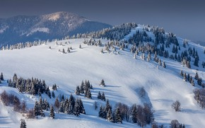 Picture winter, forest, the sun, snow, trees, mountains, the view from the top, Slovakia, Donovaly