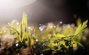 Wallpaper flower, light, nature