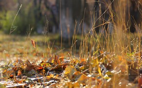 Picture autumn, leaves, background, weed, deadwood