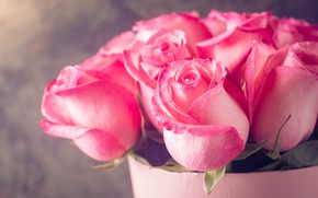 Picture roses, bouquet, pink