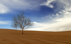 Picture sand, the sky, tree