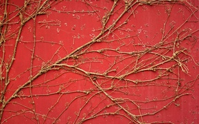 Picture branches, background, wall