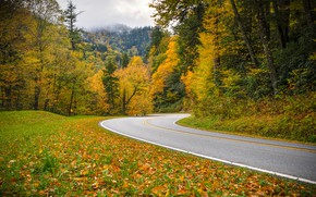 Picture road, autumn, forest, Tennessee, Tn, Great Smoky Mountains National Park, National Park great smoky mountains