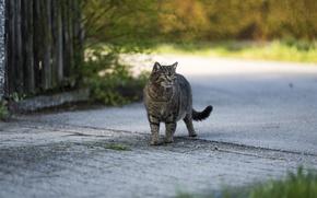 Wallpaper street, look, cat