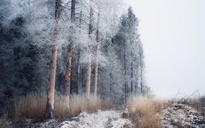 Wallpaper winter, forest, snow, frost, fog