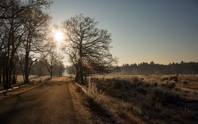 Picture road, light, morning