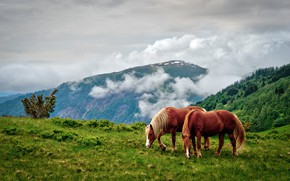 Picture summer, clouds, mountains, nature, horses, horse, grazing