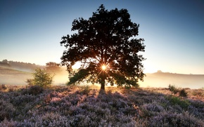 Picture field, summer, the sky, grass, the sun, flowers, fog, tree, dawn, morning, meadow