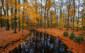 Wallpaper river, autumn, forest