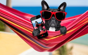 Picture dog, glasses, hammock, phone