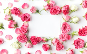 Wallpaper romantic, roses, buds, valentine`s day, roses, flowers, pink