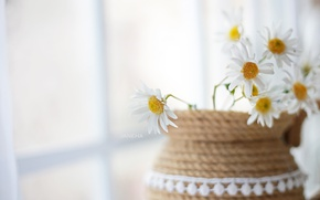Wallpaper background, chamomile, flowers