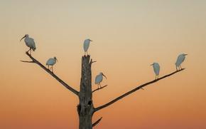 Picture sunset, birds, tree