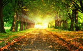 Picture Nature, Road, Trees, Leaves, Light, Alley, Light, Nature, Shine, Trees, Way, Alley, Foliage