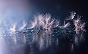 Wallpaper drops, dandelion, fuzzes, water, reflection, the parachutes, macro