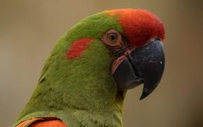 Picture Bird, Parrot, Color