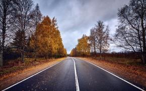 Picture road, autumn, asphalt, leaves