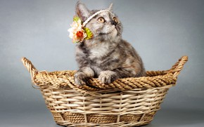 Picture cat, background, basket