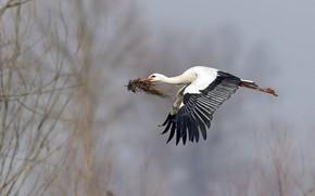 Picture bird, spring, stork