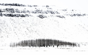 Picture winter, snow, trees, Iceland
