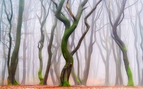 Picture forest, trees, Park, trunks, foliage, haze, figure