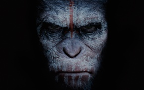 Picture cinema, movie, film, angry, Dawn of the Planet of the Apes, Cesar