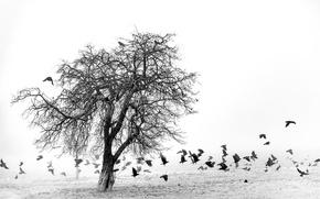 Picture field, birds, fog, tree
