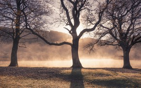 Picture autumn, trees, fog