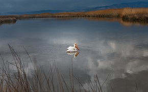 Wallpaper grass, water, landscape, mountains, birds, nature, lake, pond, shore, pair, pond, pelicans