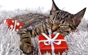 Picture cat, holiday, new year, Christmas, sleeping, gifts, lies, kitty, tinsel, box, bokeh