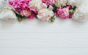 Wallpaper White, Pink, Flowers, Wooden background, Peonies