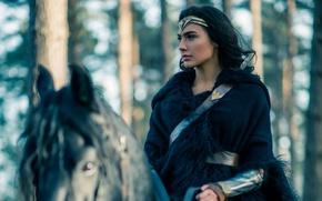 Picture cinema, Wonder Woman, woman, movie, brunette, horse, film, DC Comics, Gal Gadot