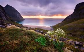 Wallpaper sea, beach, leaves, clouds, sunset, stones, rocks, hills, shore, vegetation, plant, the evening, horizon, surf