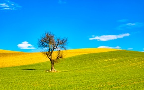 Picture field, the sky, clouds, tree, Italy, Apulia, Beccari