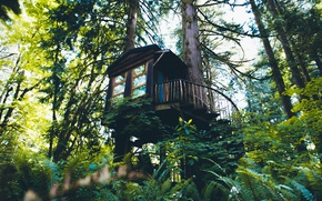Wallpaper nature, forest, house, trees, Washington