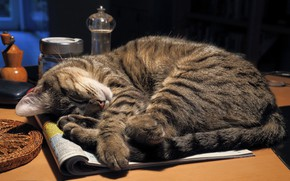 Picture cat, cat, table, sleep, journal