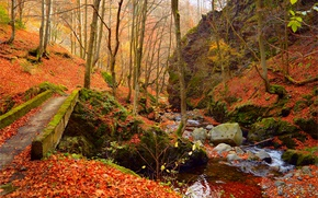 Picture Autumn, Forest, Stones, Stream, Fall, Foliage, Autumn, Colors, Forest, Leaves, Flow