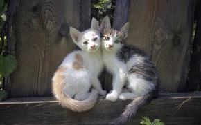 Picture kittens, seals, Milota